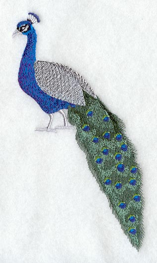 peacock and frame