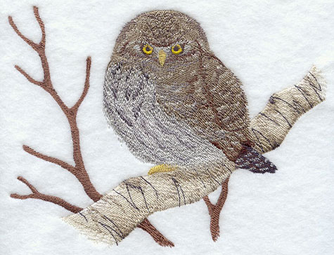 Northern Pygmy Owl on birch branch machine embroidery design.