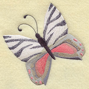 A butterfly with animal print zebra stripes.