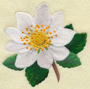 Mountain Avens (Irish wildflower) machine embroidery design.