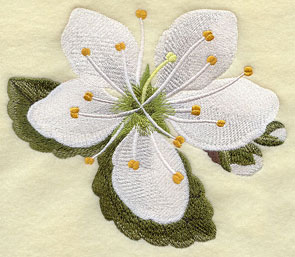 Blackthorn (Irish wildflower) machine embroidery design.