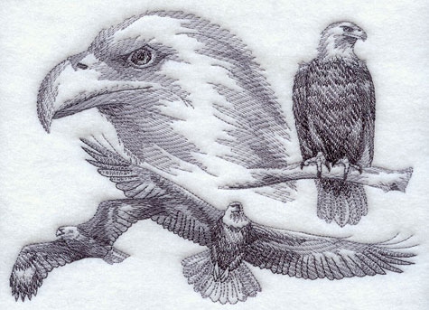 A sketchbook-style medley of bald eagles.
