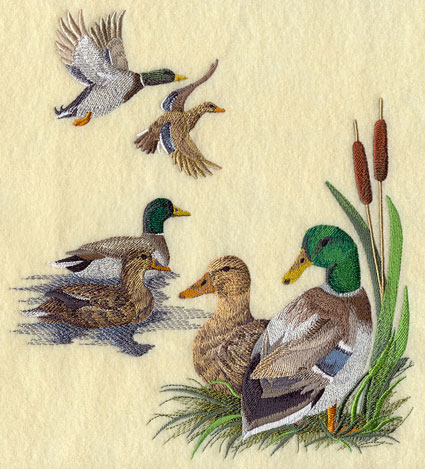 Mallard duck collage, with mallards flying, swimming, and resting on shore.