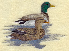 Two mallard ducks floating on a lake.