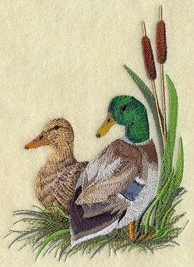 A mallard duck pair resting in the cattails.
