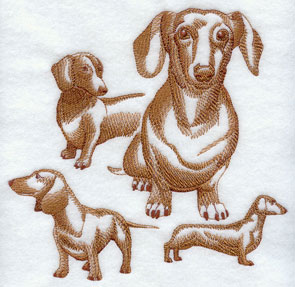 A sketchbook style medley or collage of Dachshund dogs.