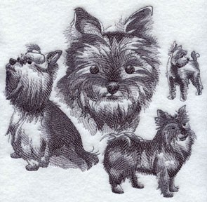 A sketchbook style medley or collage of Yorkie dogs.
