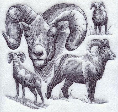 Sketchy-style wildlife medley of bighorn sheep.