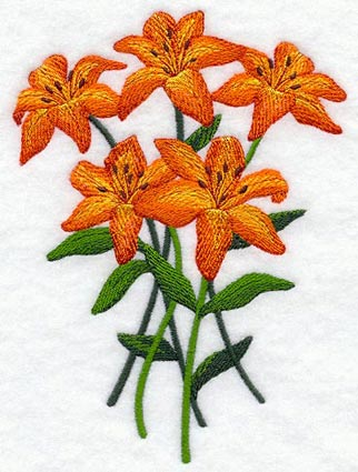 Tiger lilly 1