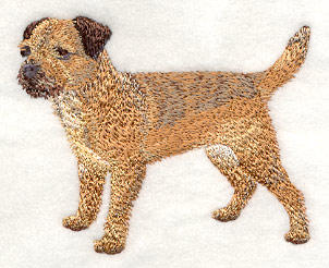Border Terrier Machine Embroidery Design  Dog Breeds Picture