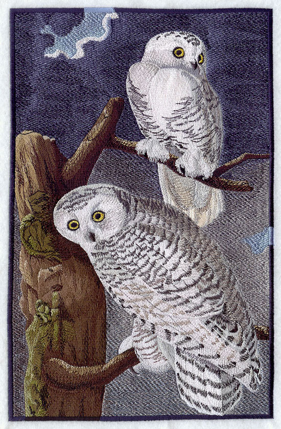 Based on the work of John James Audubon, this realistic portrait of the Snowy Owl is beautifully layered and shaded.