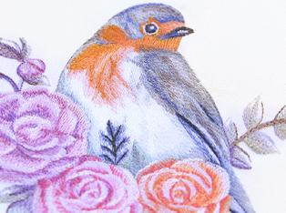 Explore the Categories: Bluebirds